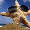 Starfish23