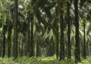 01_plantations_1