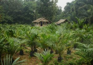 11_plantations_-_jeunes_arbres_0