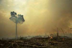 Palm oil production is a major cause of deforestration