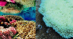 860-header-coral-bleaching