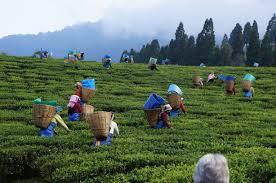assam-tea-workers