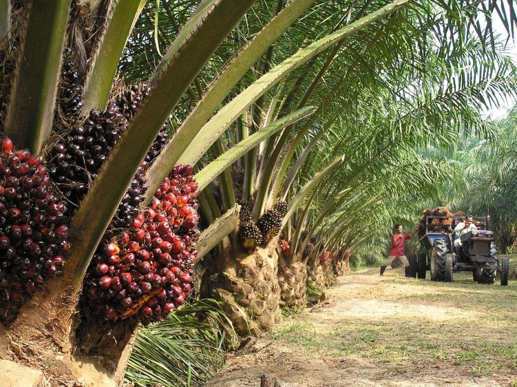 certified-sustainable-palm-oil-derivatives-prohibitively-expensive-in-us