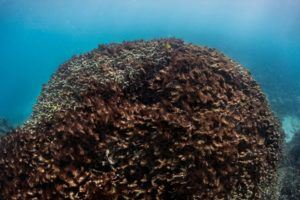 coral-picture