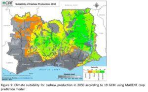 2050 Cashew Production Suitability in Ivory Coast & Ghana