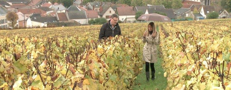 fournel-vineyard-768