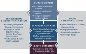 Lyme disease, a tick-borne infection that has spread through much of the US, is illustrative of how climate change threatens population health.