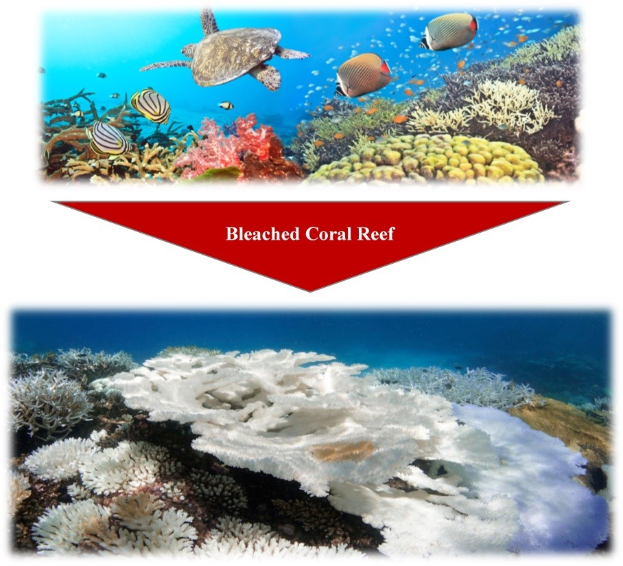 maldives-2nd-image-corals