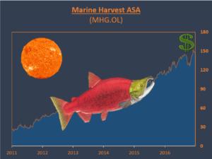 marine-harvest-final-graph