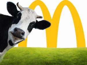 mcdonalds-cow