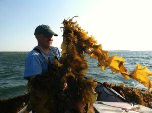Kelp!
