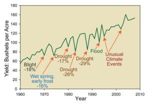 Extreme weather events cause significant reductions in corn yields.