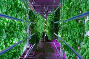 vertical-farming-2