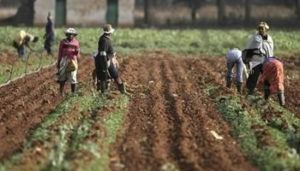 african-farmers