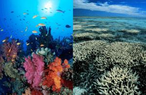 coral_bleach2