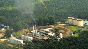 Palm Oil Plantation and Mill