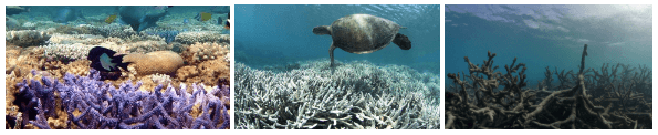 Exhibit 1. The impact of climate change on coral: healthy [9], bleached [8] and dead [2].