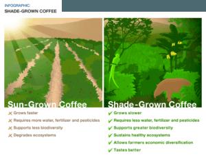 shade-grown-coffee