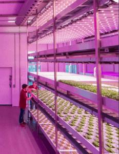 vertical-farming-copy