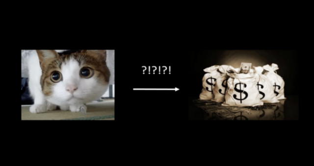 Cat money