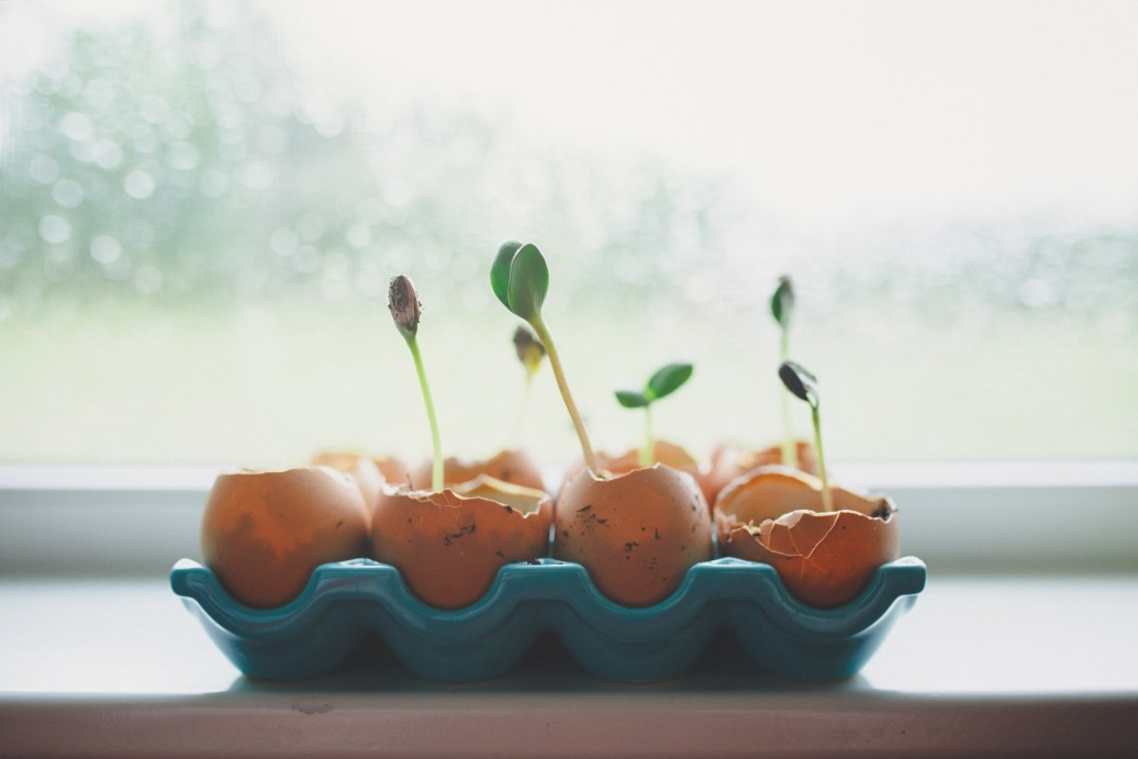 Sprouts growing from egg shells