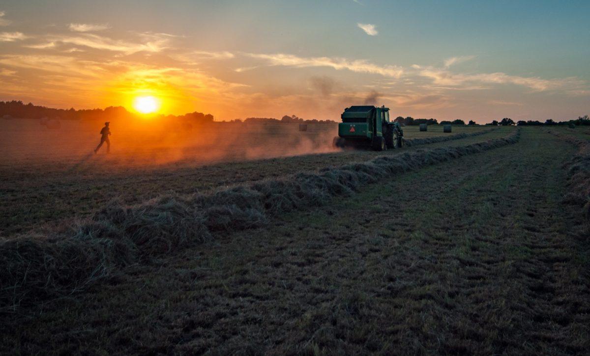 harvesting a crop